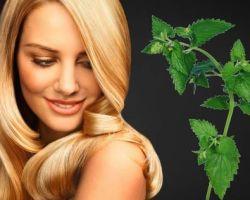 Отвары крапивы для укрепления волос: рецепты и полезные советы для красоты и здоровья
