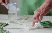 Замачивание семян в соке алоэ: полезные рекомендаци